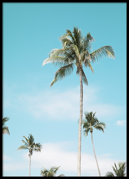 Miami Beach Palms Plakat i gruppen Studio Collections / Studio Coast to Coast / Miami hos Desenio AB (10764)