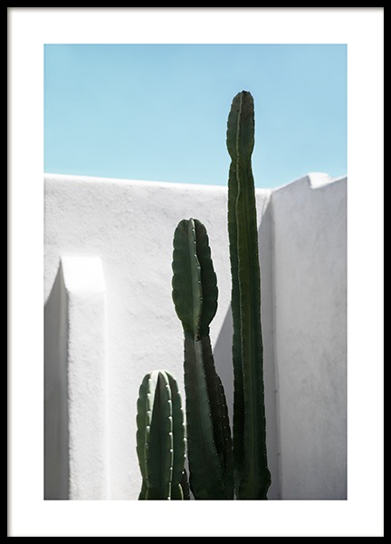 Cactus Wall Plakat i gruppen Studio Collections / Studio Coast to Coast / Palm Springs hos Desenio AB (10792)