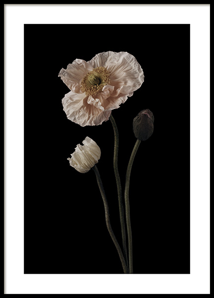 Poppies on Black No1 Plakat i gruppen Plakater / Botanik hos Desenio AB (11174)