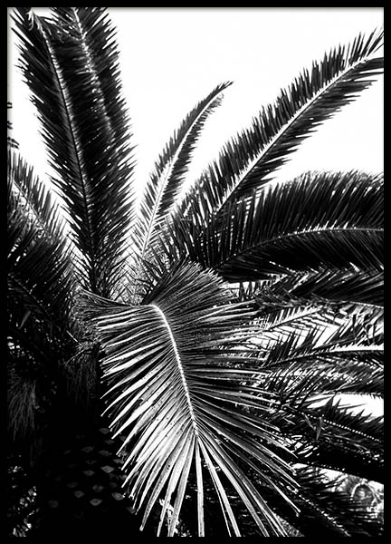 Palm Tree Crown Plakat i gruppen Plakater / Sort-hvid hos Desenio AB (3774)