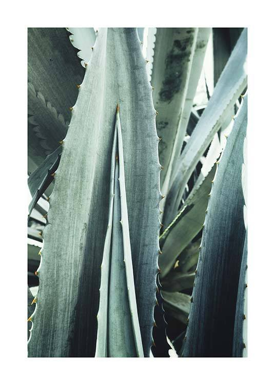 Agave Close Up Plakat / Fotokunst hos Desenio AB (10430)