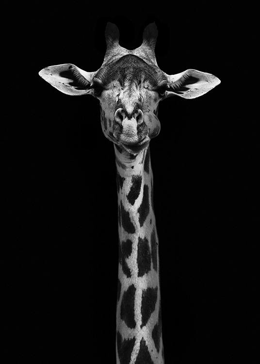 Giraffe on Black Plakat / Sort-hvid hos Desenio AB (10619)