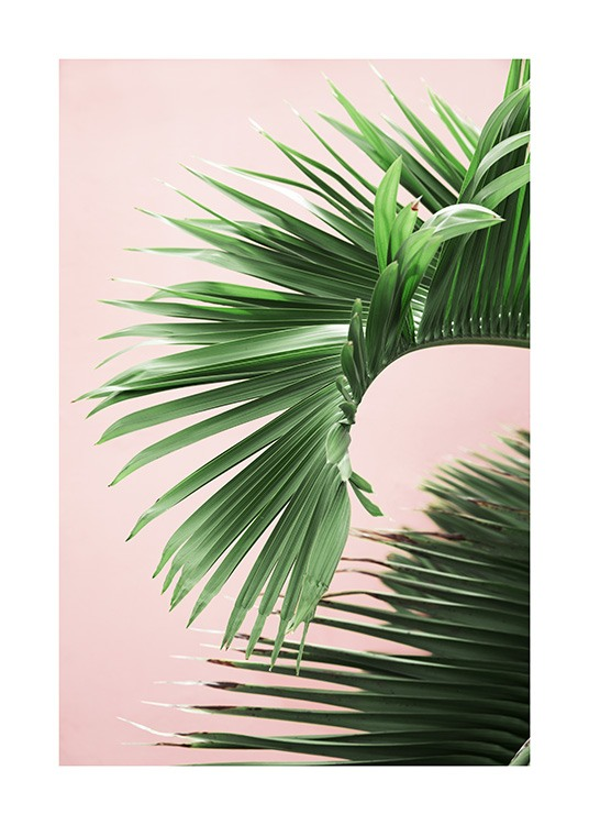 Pink and Green Palm No2 Plakat / Fotokunst hos Desenio AB (10856)