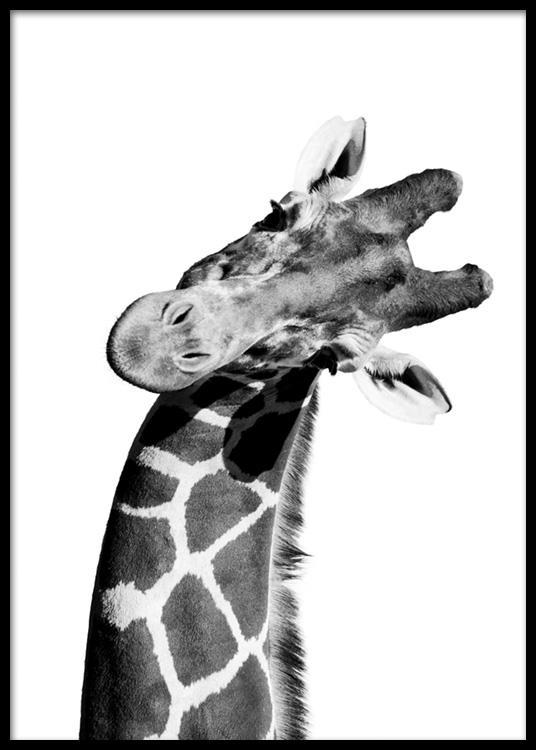 Giraffe Portrait Plakat
