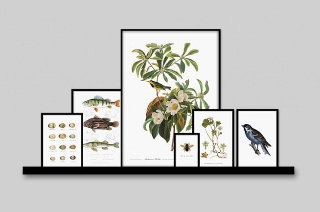 vntage botanik plakat med fugle plakat. Black Bedroom Furniture Sets. Home Design Ideas