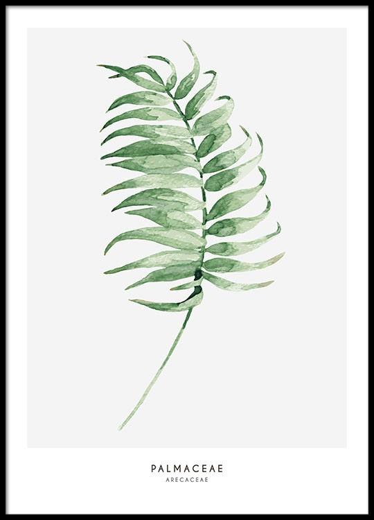 64fd3270cf75 Poster med palmeblad. Botaniske plakater med grønne planter online.